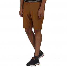 Regatta Sanjaro Shorts Dark Cumin